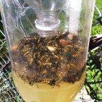 home made wasp trap - capture wasps
