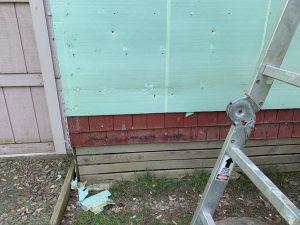 Mold under siding